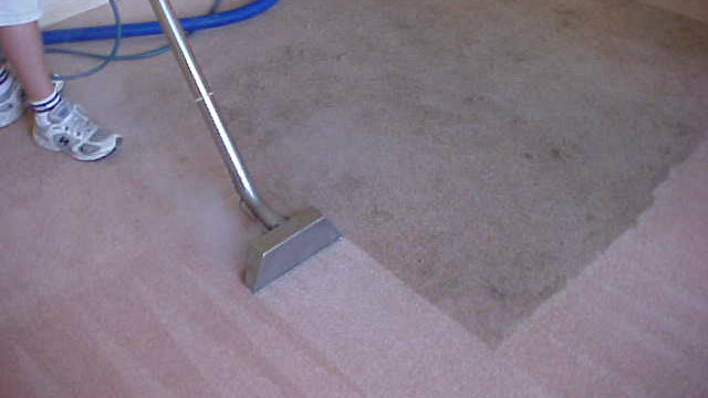 How To Get Mildew Out Of Carpet